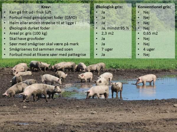 økologi økologisk svinekød dyrevelfærd din online slagter jellingnaturkod.dk Jelling Naturkød