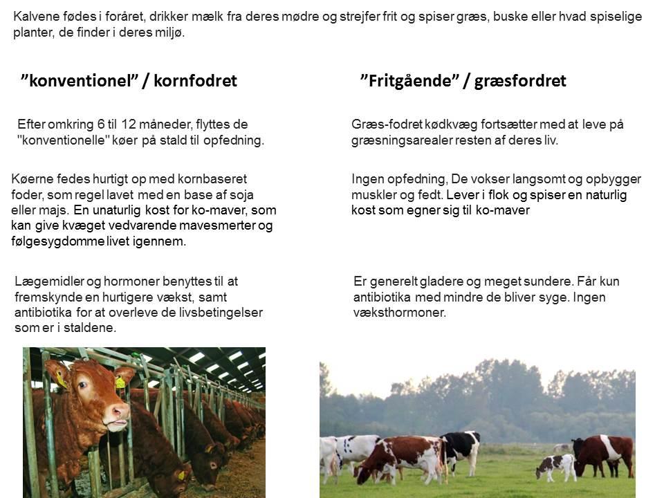 Kornfordret kontra græsfordret kødkvæg